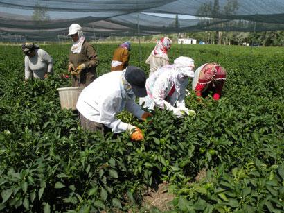 کشاورزی گرجستان
