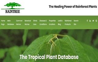 پایگاه داده Rain Tree