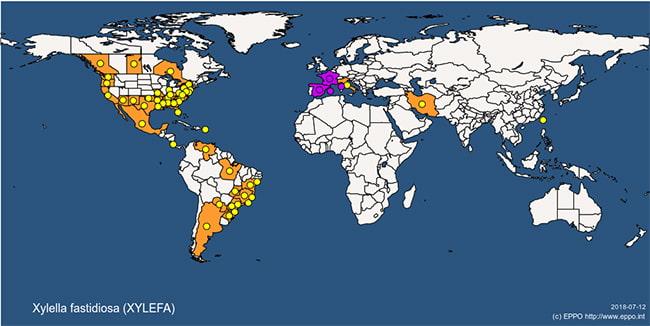 X.fastidiosa map