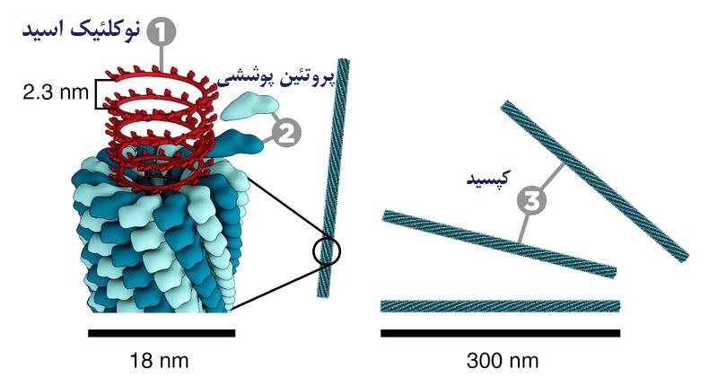 ویروس موزاییک تنباکو