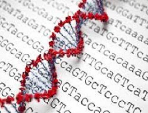 تنوع ژنتیکی