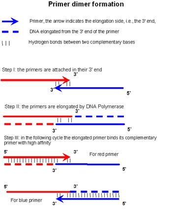 پرایمر دایمر (primer dimer)