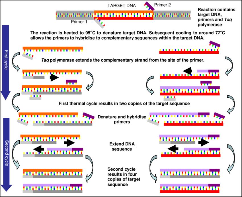 اصول PCR 