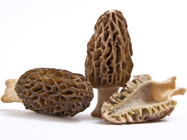 انواع قارچهای خوراکی