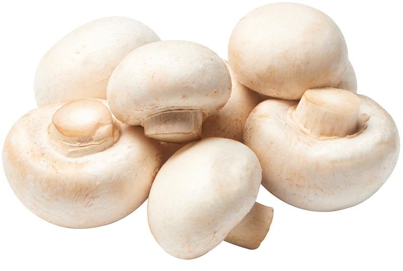 انواع قارچ های خوراکی