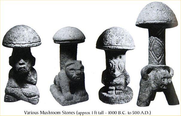 colombian-mushrooms