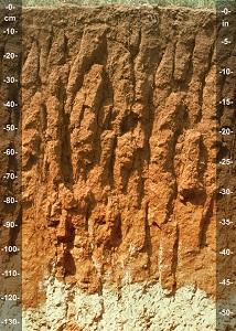 ساختار خاک ستونی